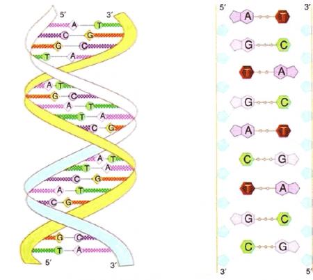 3.2.1.ADN.2