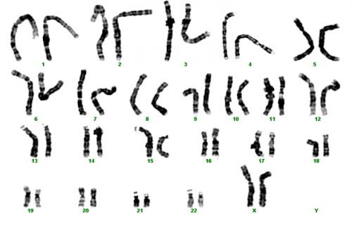 3.2.1.cromosomas.1