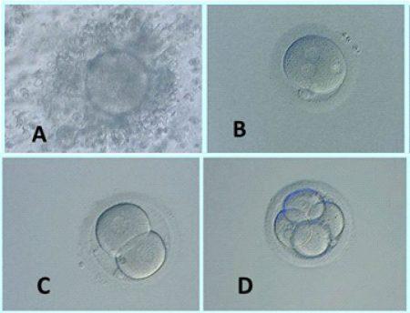 3.2.1.evolucion-embrionaria