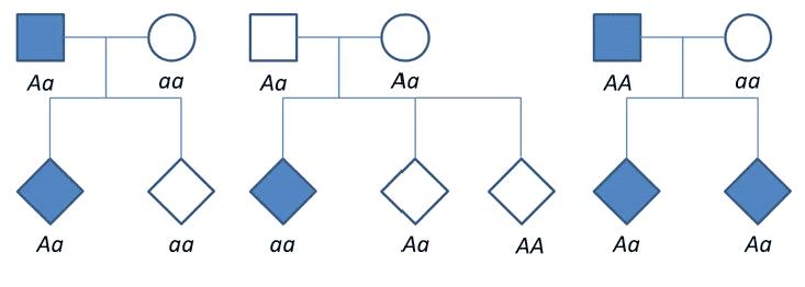 3.2.2.-arbol-genealogico