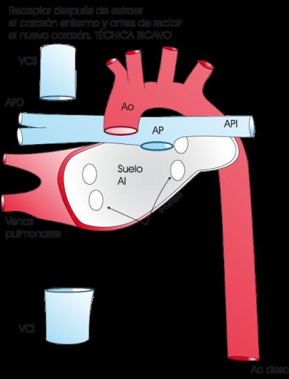 4.8.3.-corazon-receptor.a.2