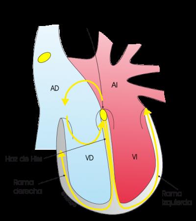 5.3.2.-taquicardia-nodal